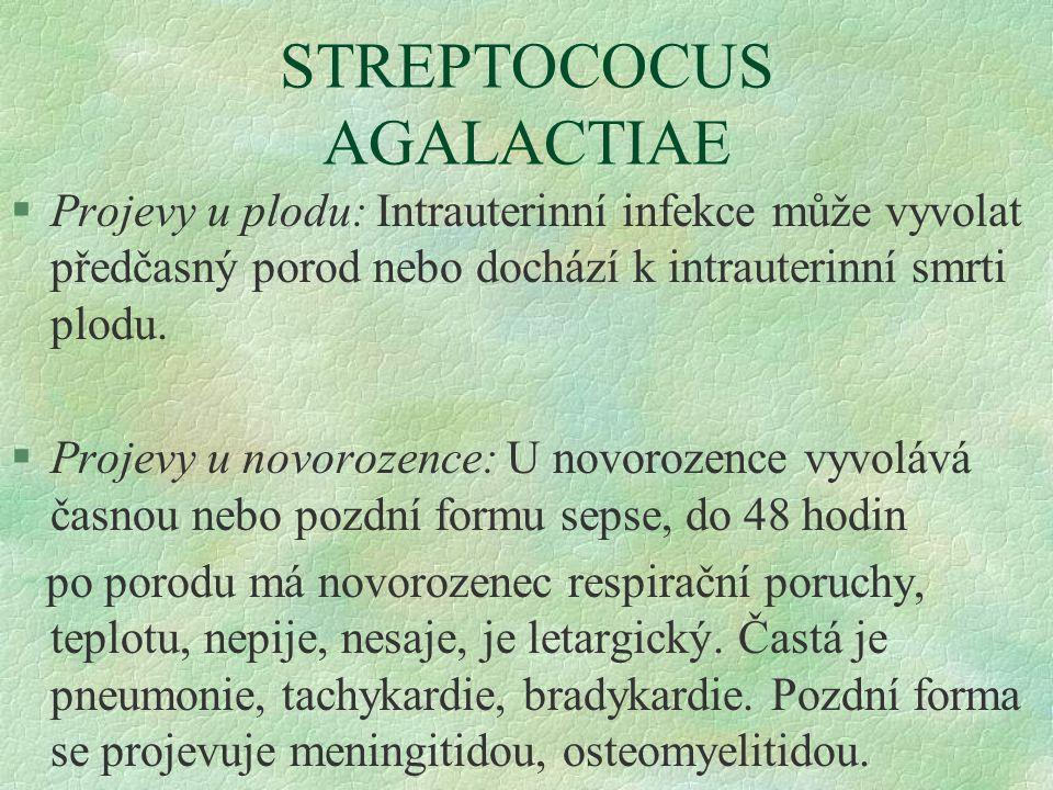 STREPTOCOCUS AGALACTIAE §Projevy u plodu: Intrauterinní infekce může vyvolat předčasný porod nebo dochází k intrauterinní smrti plodu. §Projevy u novo