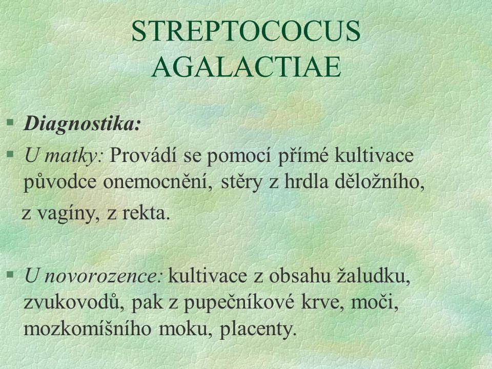 STREPTOCOCUS AGALACTIAE §Diagnostika: §U matky: Provádí se pomocí přímé kultivace původce onemocnění, stěry z hrdla děložního, z vagíny, z rekta. §U n