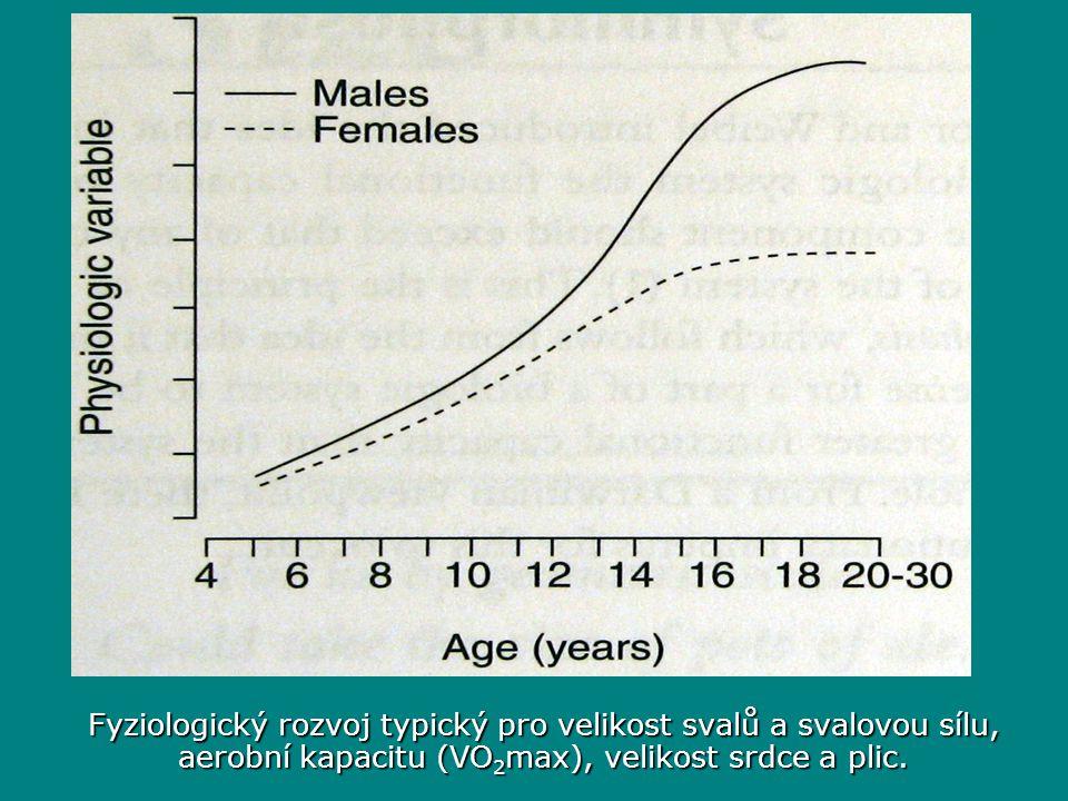 Fyziologický rozvoj typický pro velikost svalů a svalovou sílu, aerobní kapacitu (VO 2 max), velikost srdce a plic.