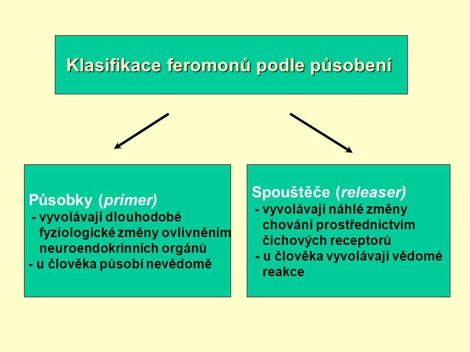 Klasifikace feromonů podle působení Působky (primer) - vyvolávají dlouhodobé fyziologické změny ovlivněním neuroendokrinních orgánů - u člověka působí