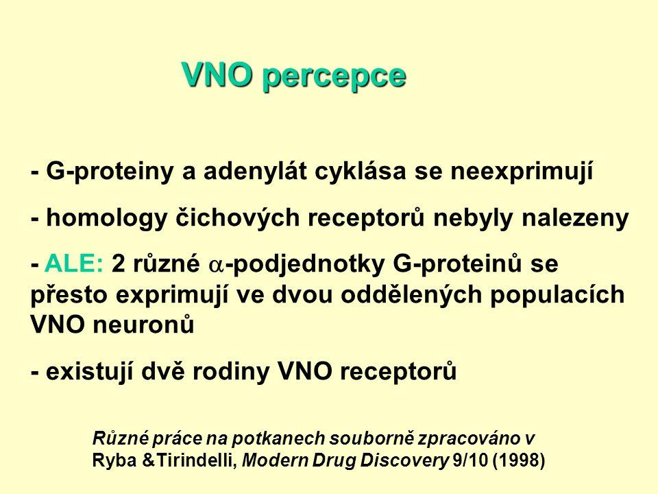 VNO percepce - G-proteiny a adenylát cyklása se neexprimují - homology čichových receptorů nebyly nalezeny - ALE: 2 různé  -podjednotky G-proteinů se