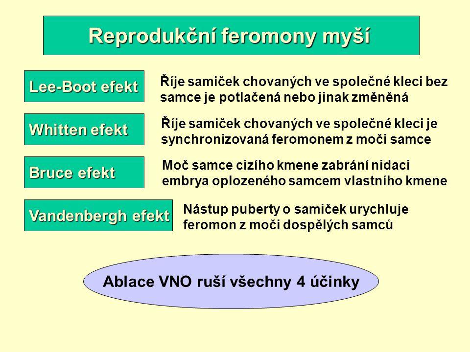Reprodukční feromony myší Lee-Boot efekt Whitten efekt Bruce efekt Vandenbergh efekt Říje samiček chovaných ve společné kleci bez samce je potlačená n