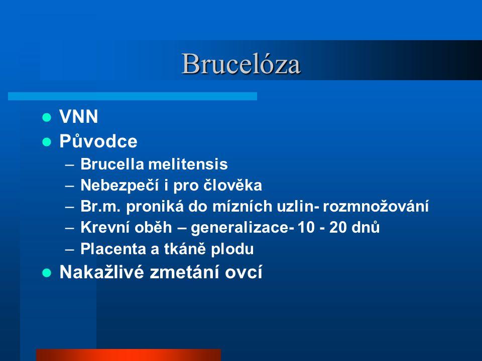 Brucelóza  VNN  Původce –Brucella melitensis –Nebezpečí i pro člověka –Br.m. proniká do mízních uzlin- rozmnožování –Krevní oběh – generalizace- 10