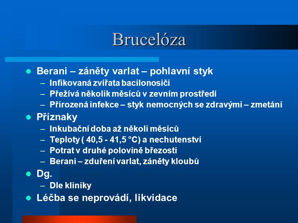 Brucelóza  Berani – záněty varlat – pohlavní styk –Infikovaná zvířata bacilonosiči –Přežívá několik měsíců v zevním prostředí –Přirozená infekce – styk nemocných se zdravými – zmetání  Příznaky –Inkubační doba až několi měsíců –Teploty ( 40,5 - 41,5 °C) a nechutenství –Potrat v druhé polovině březosti –Berani – zduření varlat, záněty kloubů  Dg.