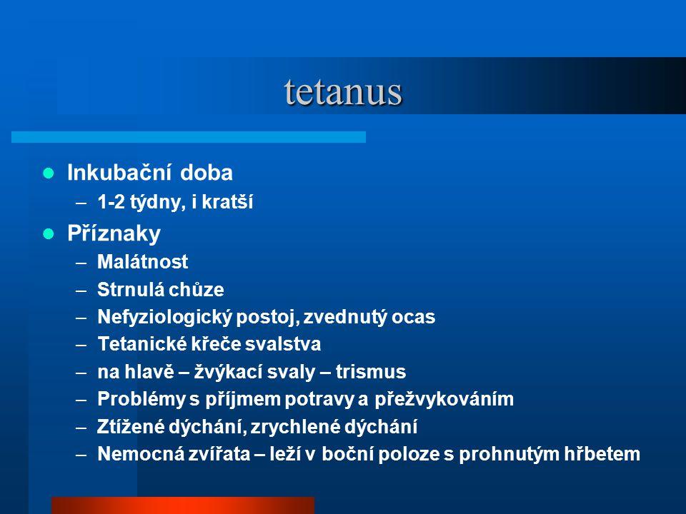 tetanus  Inkubační doba –1-2 týdny, i kratší  Příznaky –Malátnost –Strnulá chůze –Nefyziologický postoj, zvednutý ocas –Tetanické křeče svalstva –na