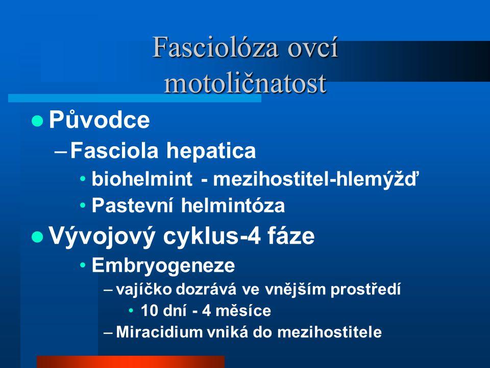 Fasciolóza ovcí motoličnatost  Původce –Fasciola hepatica •biohelmint - mezihostitel-hlemýžď •Pastevní helmintóza  Vývojový cyklus-4 fáze •Embryogeneze –vajíčko dozrává ve vnějším prostředí •10 dní - 4 měsíce –Miracidium vniká do mezihostitele