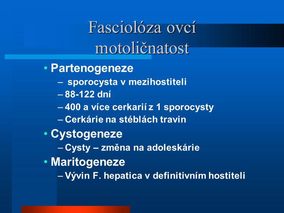 Fasciolóza ovcí motoličnatost •Partenogeneze – sporocysta v mezihostiteli –88-122 dní –400 a více cerkarií z 1 sporocysty –Cerkárie na stéblách travin •Cystogeneze –Cysty – změna na adoleskárie •Maritogeneze –Vývin F.