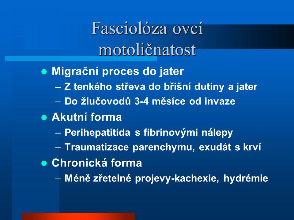 Fasciolóza ovcí motoličnatost  Migrační proces do jater –Z tenkého střeva do břišní dutiny a jater –Do žlučovodů 3-4 měsíce od invaze  Akutní forma