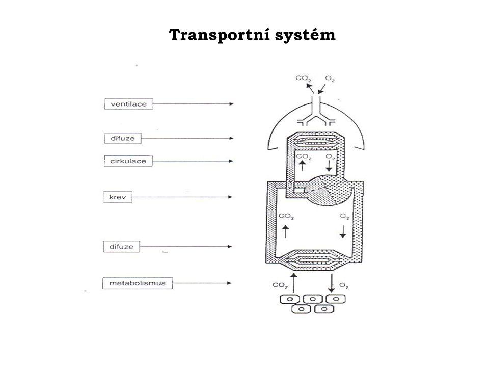 Vliv tělesné zátěže - adaptační změny  zlepšení transportu kyslíku v organizmu, snížení nároků myokardu na kyslík, zmenšení rozsahu ischémie při fyzické námaze  zlepšení periferní hemodynamiky (zmnožení kapilár ve svalech,  VO 2max - tělesné zdatnosti) •  aktivity parasympatiku,  TK,  klidové i pozátěžové SF •zlepšení statických i dynamických funkcí plic a ekonomiky dýchání