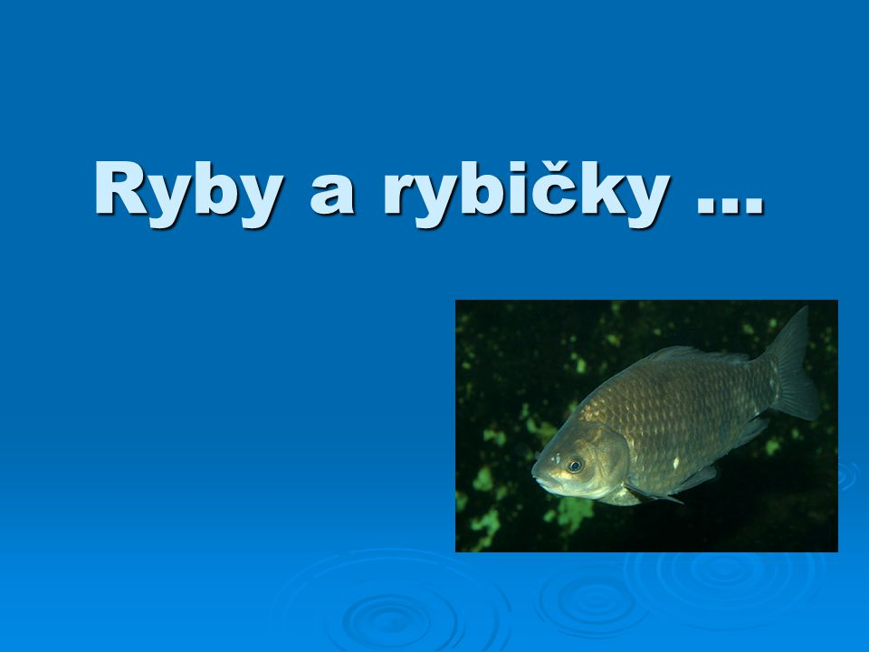 Ryby a rybičky …