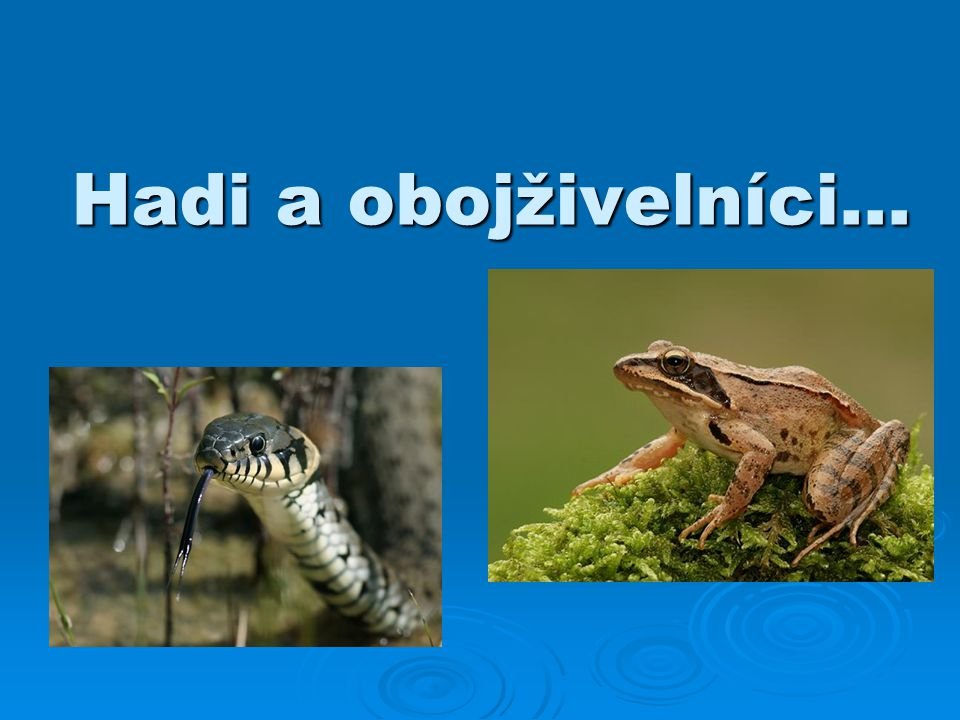 Hadi a obojživelníci…