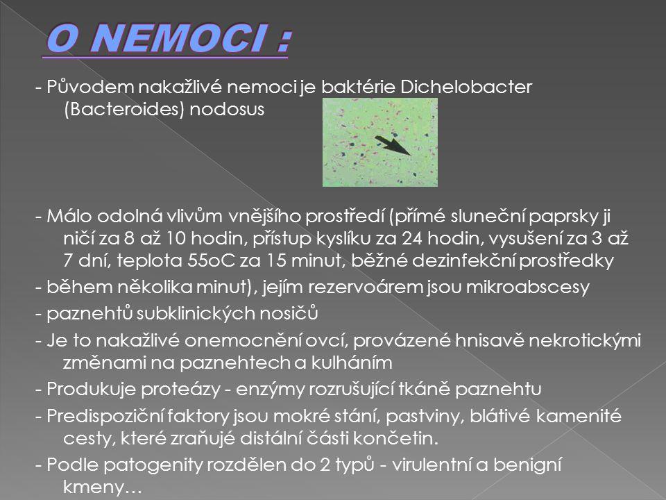 - Původem nakažlivé nemoci je baktérie Dichelobacter (Bacteroides) nodosus - Málo odolná vlivům vnějšího prostředí (přímé sluneční paprsky ji ničí za