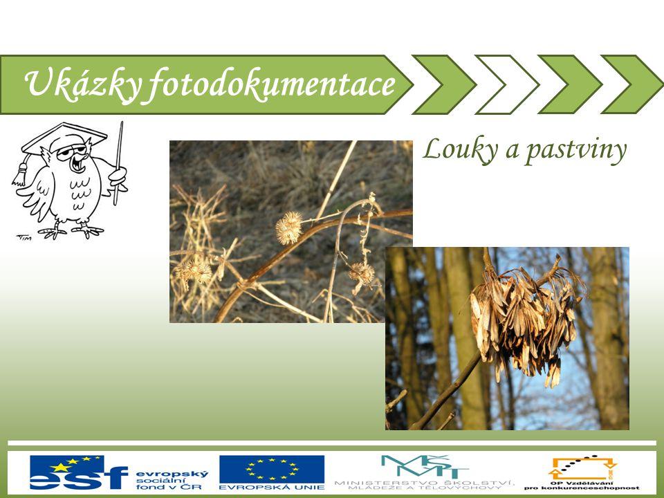 Ukázky fotodokumentace Louky a pastviny