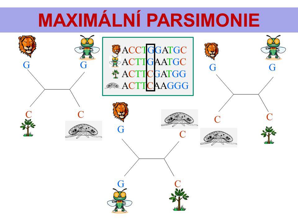 Postup maximální parsimonie předvedu na příkladu z předchozího slidu. Příbuzenské vztahy mezi 4 taxony můžeme znázornit 3 způsoby (stromy, topologiemi