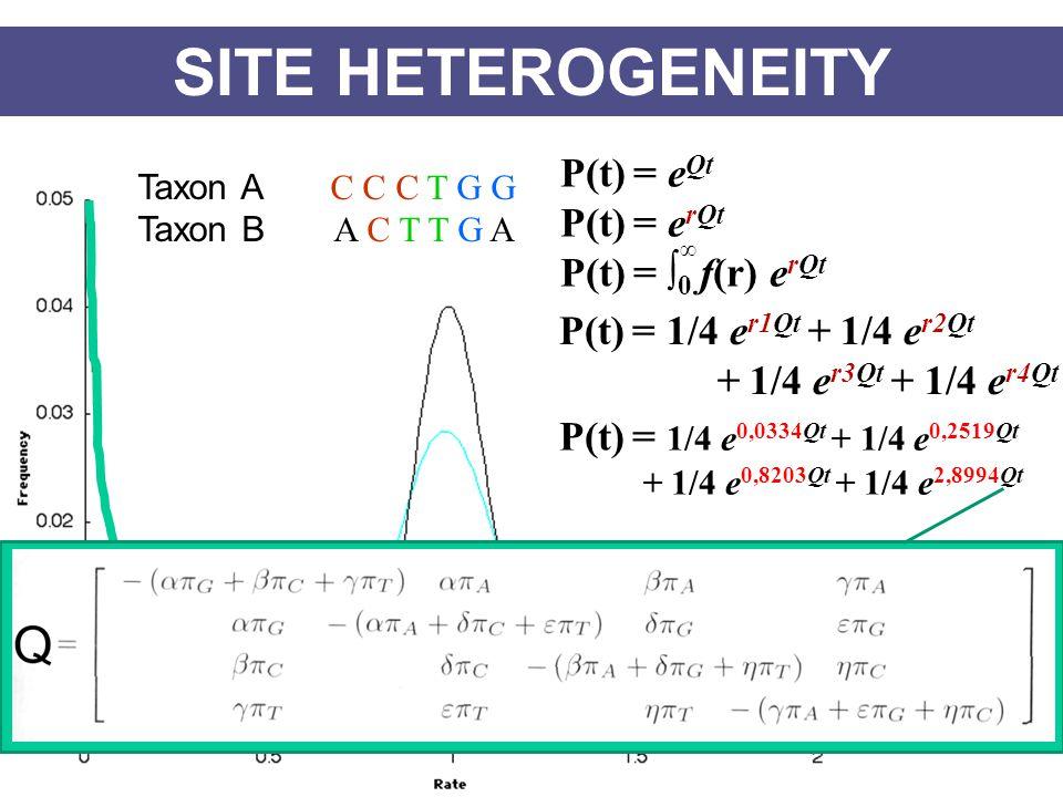 SITE HETEROGENEITY Taxon A C C C T G G Taxon B A C T T G A r1 r2 r3 r4 r5 r6 P(t) = 1/4 e r1Qt + 1/4 e r2Qt + 1/4 e r3Qt + 1/4 e r4Qt P(t) = e Qt P(t) = e rQt P(t) = ∫ 0 f(r) e rQt ∞ P(t) = 1/4 e 0,0334Qt + 1/4 e 0,2519Qt + 1/4 e 0,8203Qt + 1/4 e 2,8994Qt
