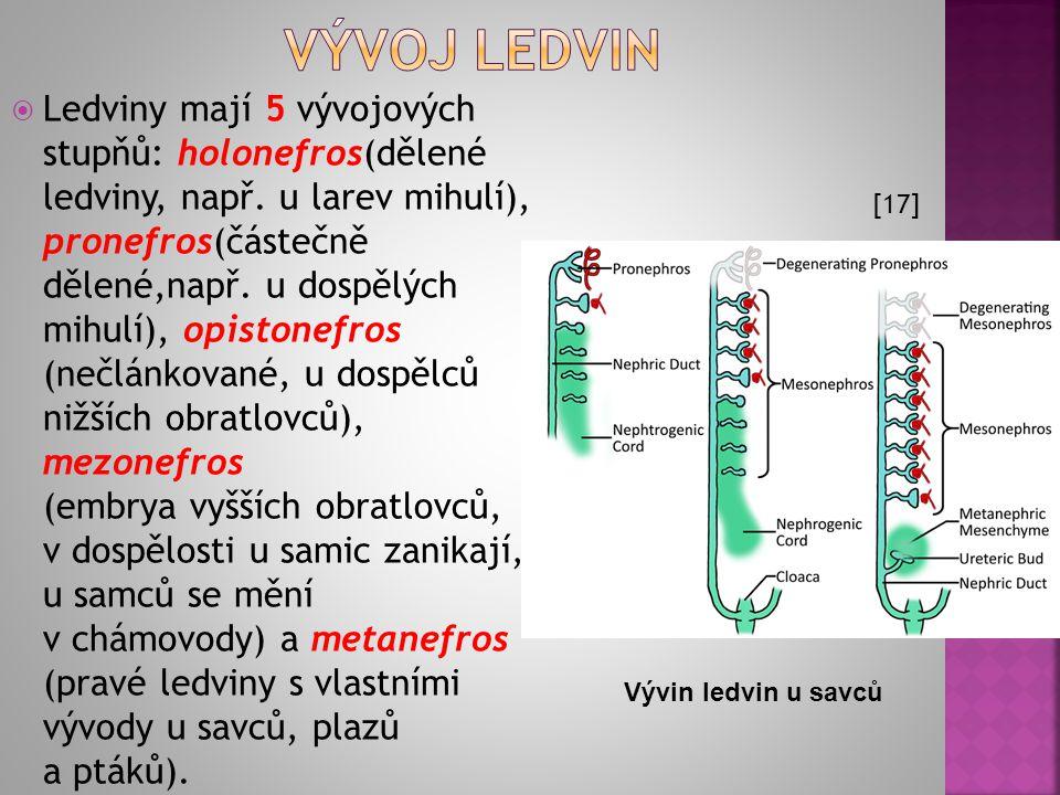  Ledviny mají 5 vývojových stupňů: holonefros(dělené ledviny, např. u larev mihulí), pronefros(částečně dělené,např. u dospělých mihulí), opistonefro