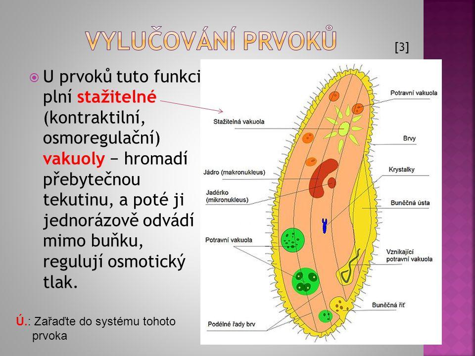  U prvoků tuto funkci plní stažitelné (kontraktilní, osmoregulační) vakuoly − hromadí přebytečnou tekutinu, a poté ji jednorázově odvádí mimo buňku,