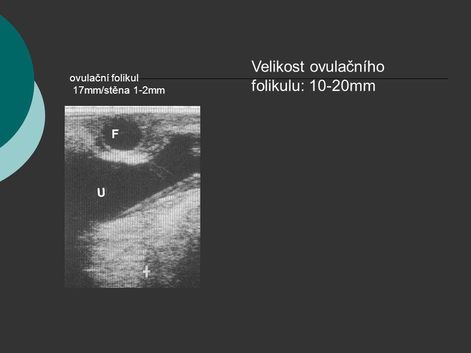 ovulační folikul 17mm/stěna 1-2mm Velikost ovulačního folikulu: 10-20mm