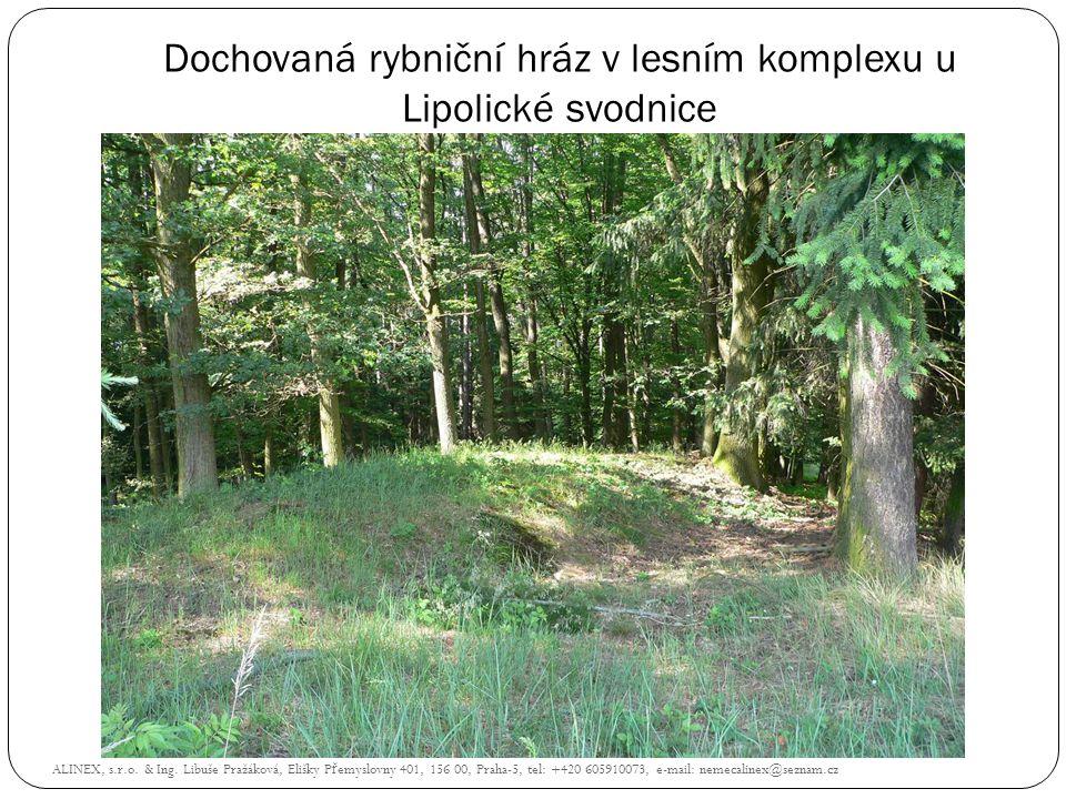 Dochovaná rybniční hráz v lesním komplexu u Lipolické svodnice ALINEX, s.r.o. & Ing. Libuše Pražáková, Elišky P ř emyslovny 401, 156 00, Praha-5, tel: