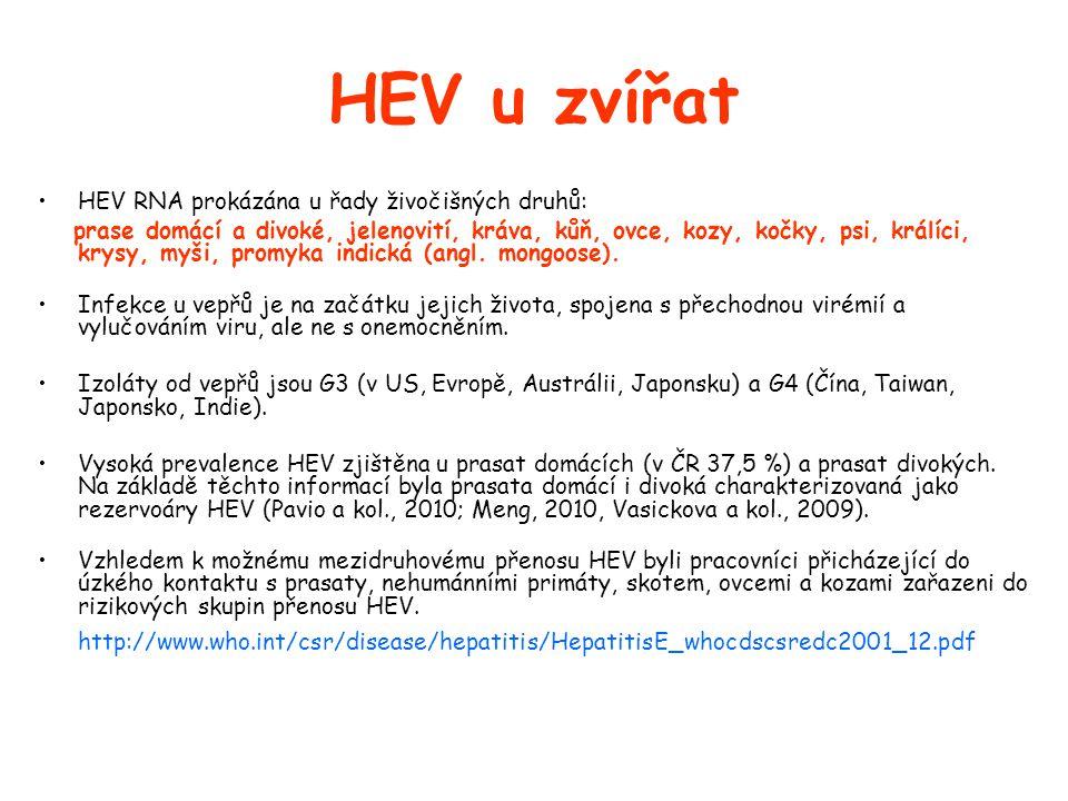 HEV u zvířat •HEV RNA prokázána u řady živočišných druhů: prase domácí a divoké, jelenovití, kráva, kůň, ovce, kozy, kočky, psi, králíci, krysy, myši, promyka indická (angl.