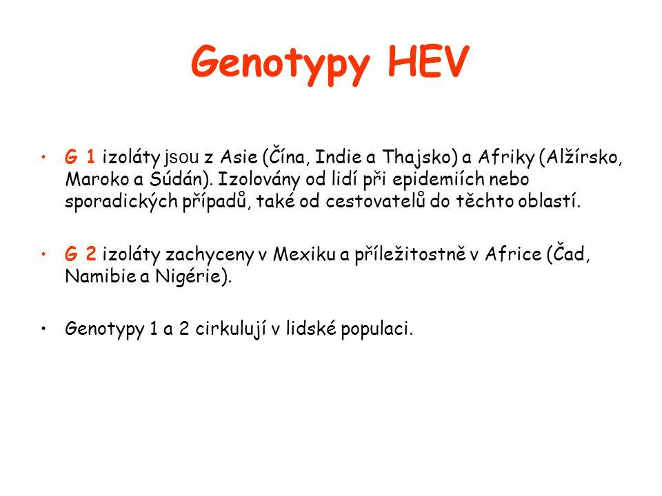 Genotypy HEV •G 1 izoláty jsou z Asie (Čína, Indie a Thajsko) a Afriky (Alžírsko, Maroko a Súdán).