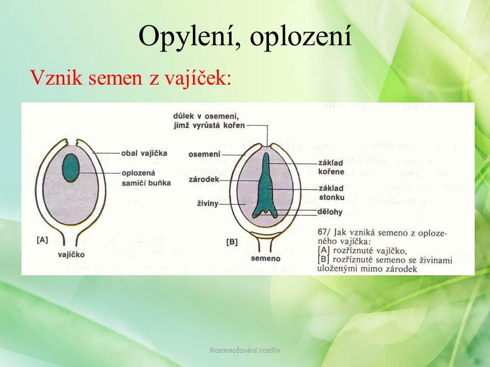 Opylení, oplození Vznik semen z vajíček: Rozmnožování rostlin