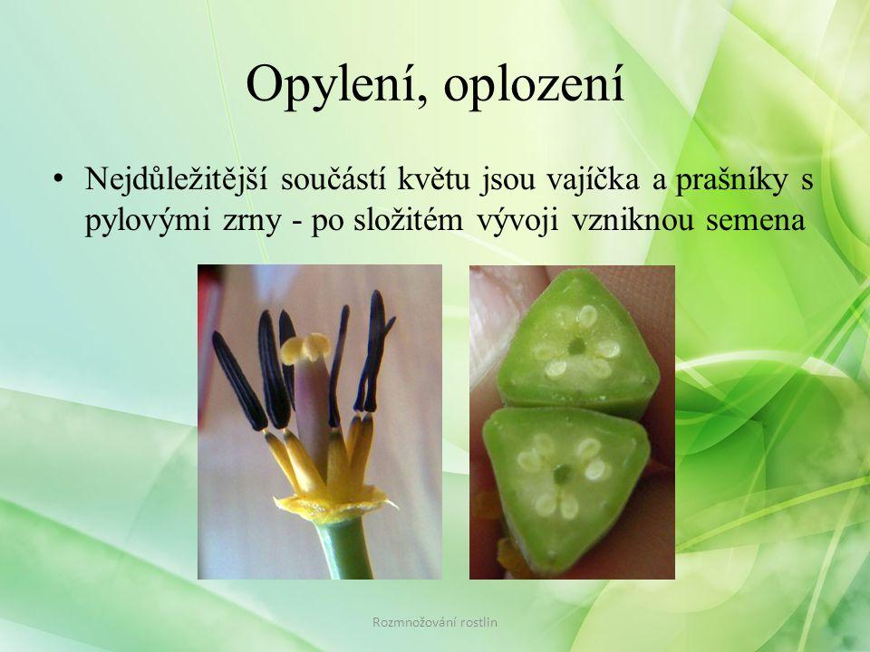 Opylení, oplození • Nejdůležitější součástí květu jsou vajíčka a prašníky s pylovými zrny - po složitém vývoji vzniknou semena Rozmnožování rostlin