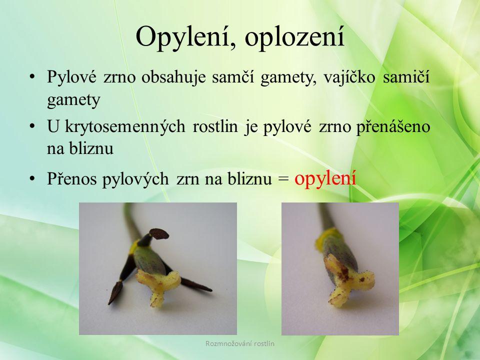 Opylení, oplození • Pylové zrno obsahuje samčí gamety, vajíčko samičí gamety • U krytosemenných rostlin je pylové zrno přenášeno na bliznu • Přenos pylových zrn na bliznu = opylení Rozmnožování rostlin