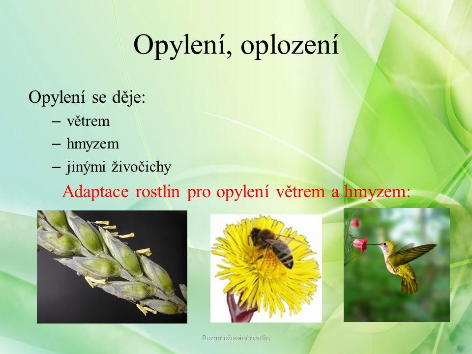 Opylení, oplození Opylení se děje: – větrem – hmyzem – jinými živočichy Adaptace rostlin pro opylení větrem a hmyzem: Rozmnožování rostlin