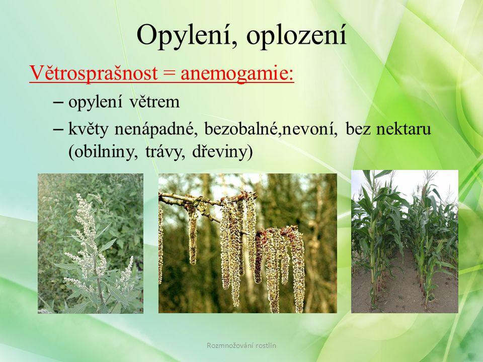 Opylení, oplození Větrosprašnost = anemogamie: – opylení větrem – květy nenápadné, bezobalné,nevoní, bez nektaru (obilniny, trávy, dřeviny) Rozmnožování rostlin