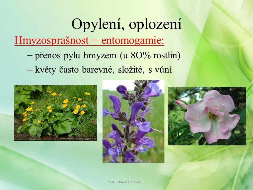 Opylení, oplození Hmyzosprašnost = entomogamie: – přenos pylu hmyzem (u 8O% rostlin) – květy často barevné, složité, s vůní Rozmnožování rostlin