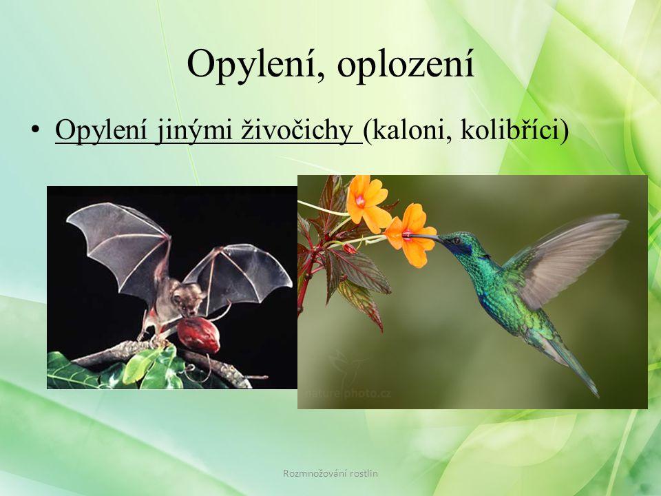 Opylení, oplození • Opylení jinými živočichy (kaloni, kolibříci) Rozmnožování rostlin