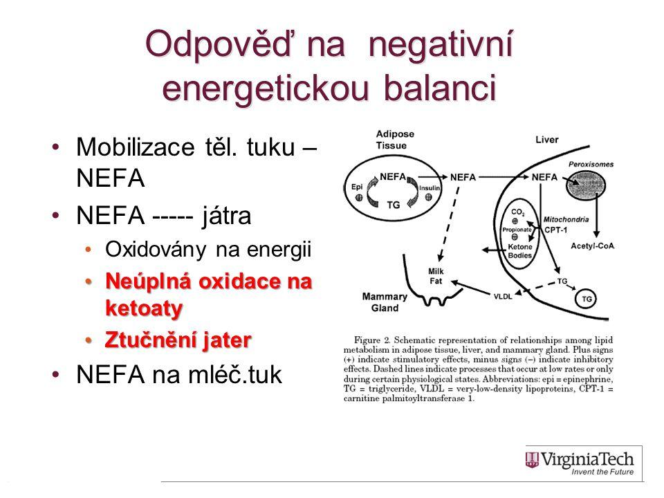 Odpověď na negativní energetickou balanci 13 •Mobilizace těl. tuku – NEFA •NEFA ----- játra • Oxidovány na energii • Neúplná oxidace na ketoaty • Ztuč
