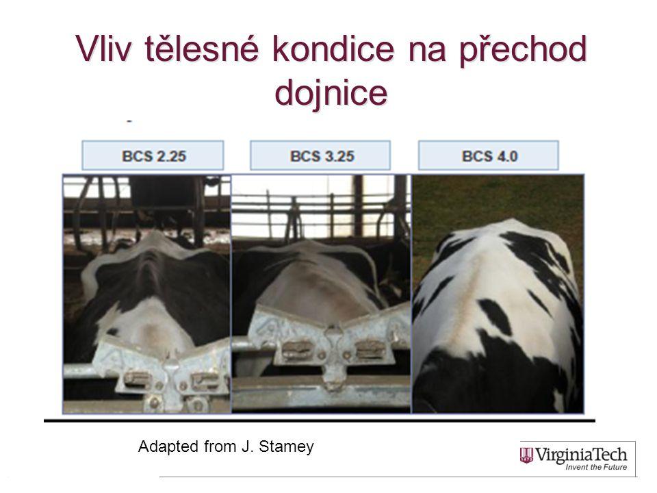 Vliv tělesné kondice na přechod dojnice 14 Adapted from J. Stamey