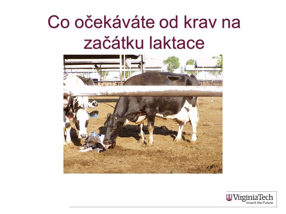 Kráva po otelení : •Porod bez asistence a zčištění do 12 hodin •Žádný výskyt metabolických poruch ani mastitid •Velký apetit •užitkovost 45 L od 14.