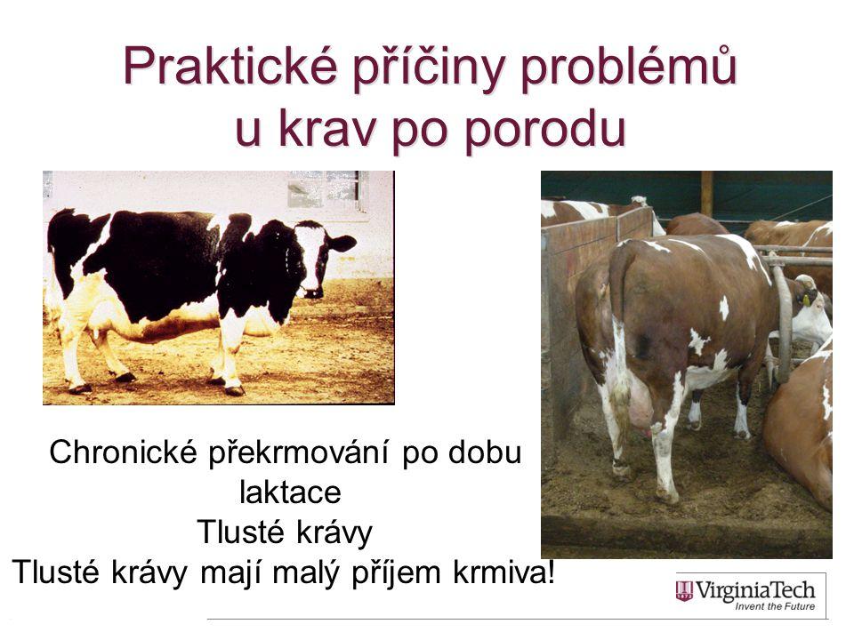 Praktické příčiny problémů u krav po porodu 21 Chronické překrmování po dobu laktace Tlusté krávy Tlusté krávy mají malý příjem krmiva!