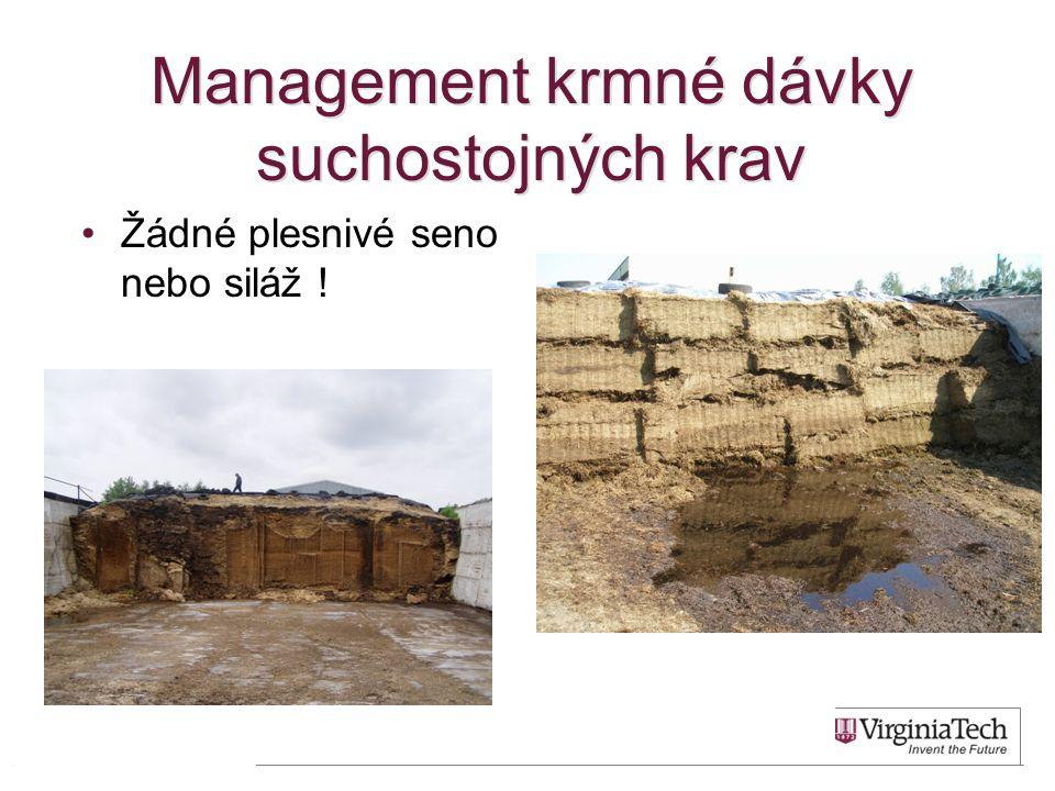 Management krmné dávky suchostojných krav •Žádné plesnivé seno nebo siláž ! 46