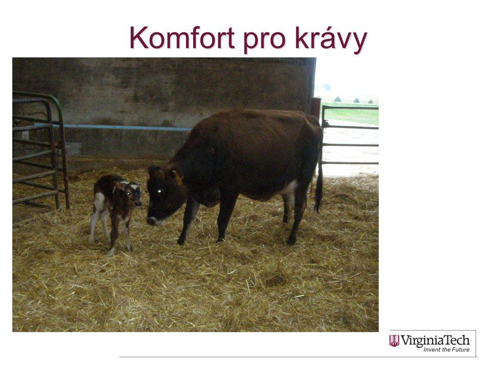 Komfort pro krávy 52