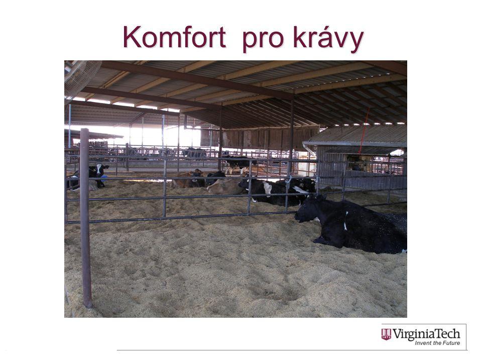Komfort pro krávy 53