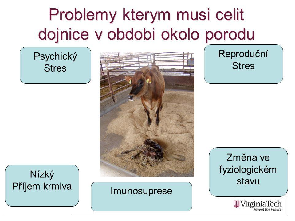 Managementem k prevenci problémů a zvýšení reprodukce •První – krávy při zasušení ø tel.
