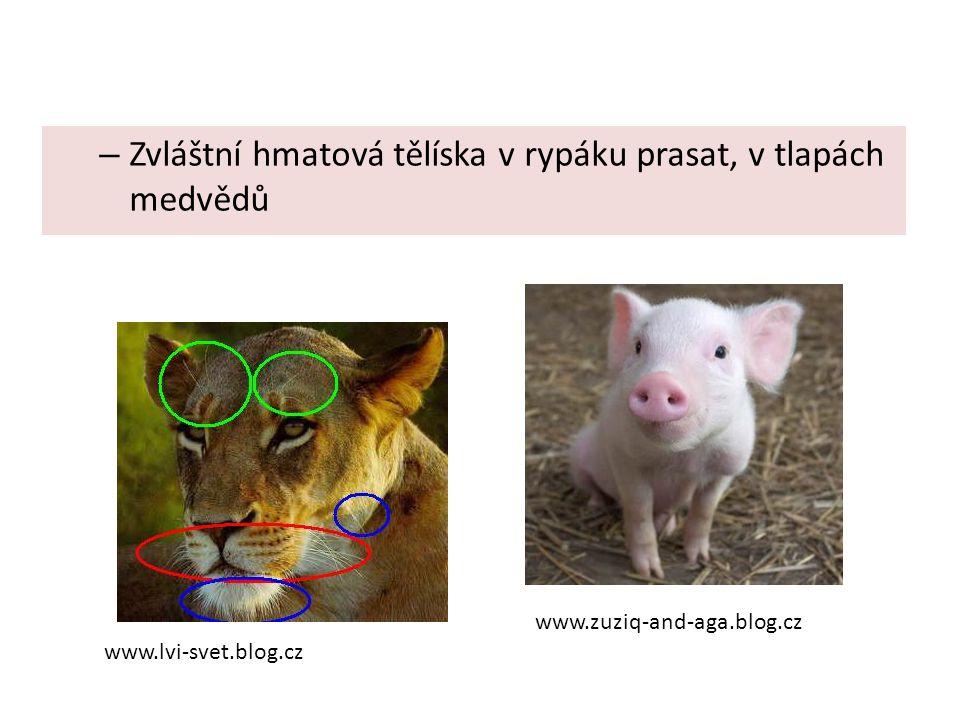 – Zvláštní hmatová tělíska v rypáku prasat, v tlapách medvědů www.lvi-svet.blog.cz www.zuziq-and-aga.blog.cz