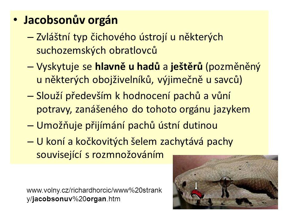 • Jacobsonův orgán – Zvláštní typ čichového ústrojí u některých suchozemských obratlovců – Vyskytuje se hlavně u hadů a ještěrů (pozměněný u některých
