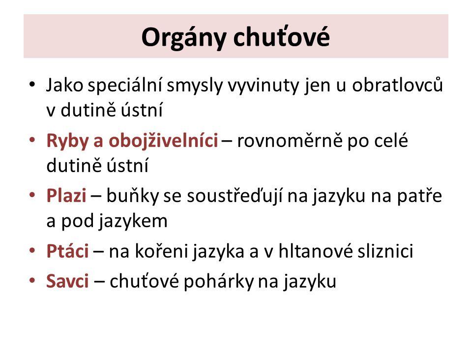 • Zdroje Knoz, J.: Obecná zoologie.SPN, Praha, 1 989.
