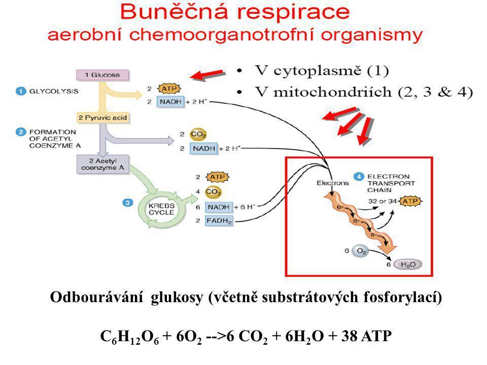 (1) absorpce slunečního záření fotoreceptorem a excitace elektron u fotoreceptoru (2) fotolýza vody: H 2 O 2H + + 2e - + 1/2O 2 (3) fotoredukce NADP + : NADP + + 2H + + 2e - NADPH + H + Protony (2H+) v této reakci pocházejí z fotolýzy vody, z níž byly uvolněny po proběhlých procesech uvedených v bod e (1).