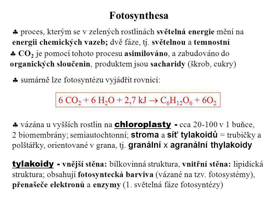 Fotosynthesa  proces, kterým se v zelených rostlinách světelná energie mění na energii chemických vazeb; dvě fáze, tj. světelnou a temnostní  CO 2 j