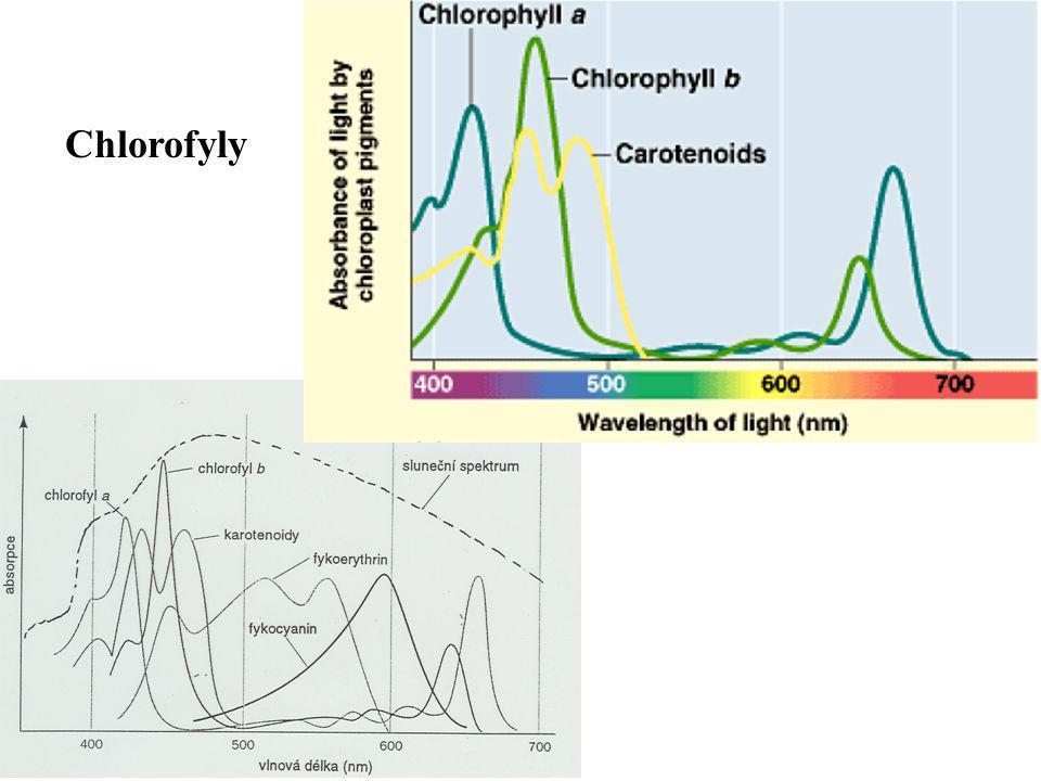 Chlorofyly