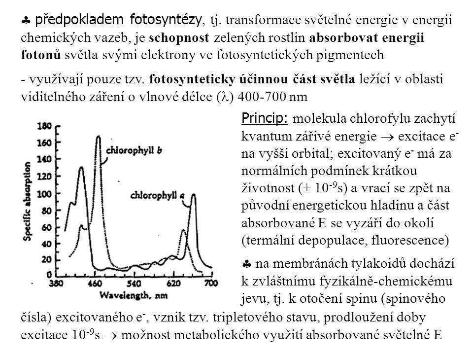  předpokladem fotosyntézy, tj. transformace světelné energie v energii chemických vazeb, je schopnost zelených rostlin absorbovat energii fotonů svět