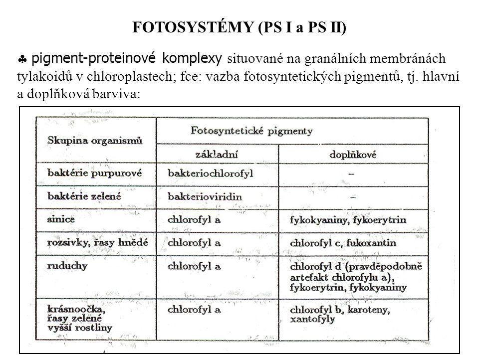  pigment-proteinové komplexy situované na granálních membránách tylakoidů v chloroplastech; fce: vazba fotosyntetických pigmentů, tj. hlavní a doplňk
