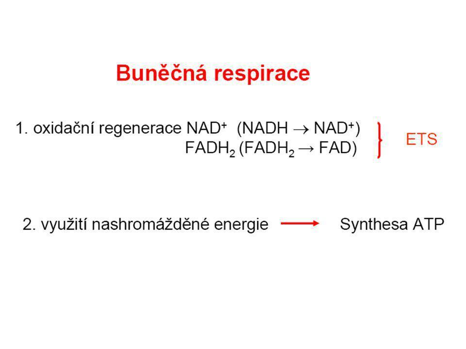  předpokladem fotosyntézy, tj.