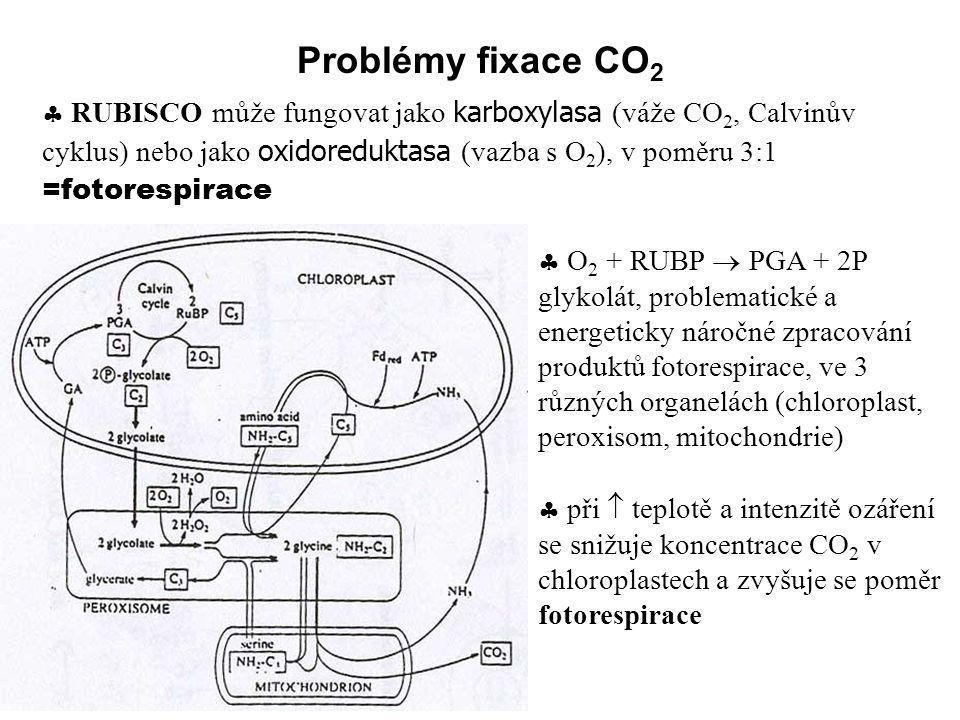 Problémy fixace CO 2  RUBISCO může fungovat jako karboxylasa (váže CO 2, Calvinův cyklus) nebo jako oxidoreduktasa (vazba s O 2 ), v poměru 3:1 =foto